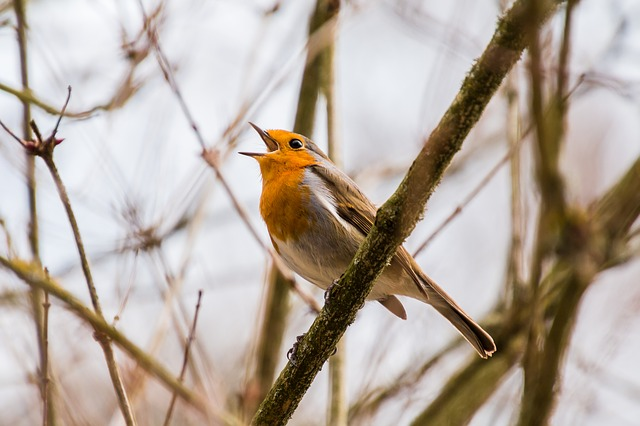 Birds Will Sing