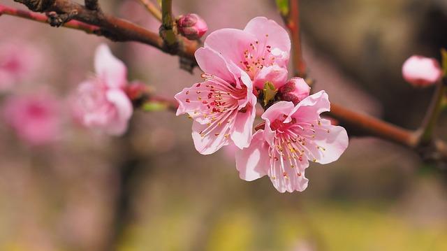 Trees Blossom