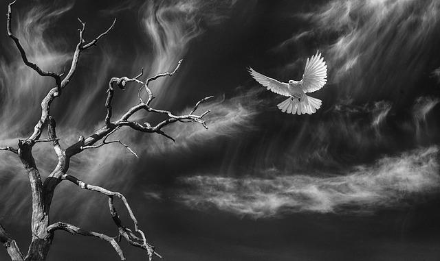 Dove, Sky, Tree